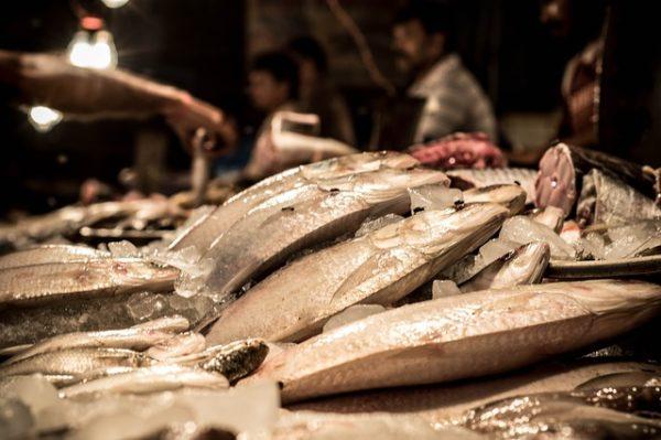fish-915212_640
